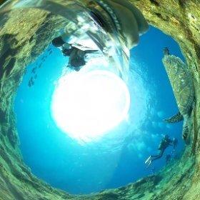 2020/08/10 八丈島・板場、アオウミガメ #padi #diving #フリッパーダイブセンター #八丈島 #theta #theta_padi #theta360 #群馬 #伊勢崎 #ダイビングショップ #ダイビングスクール #ライセンス取得