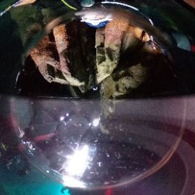 2019//11/09 黄金崎ツアー #padi #diving #フリッパーダイブセンター #黄金崎 #theta #theta_padi #theta360 #群馬 #伊勢崎 #ダイビングショップ #ダイビングスクール #ライセンス取得