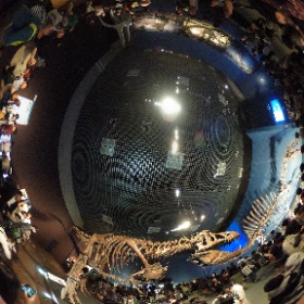 恐竜博2016(国立科学博物館)に行って来た♪ 基本写真撮影OKってのが嬉しいね☆ その1 #theta360