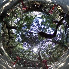 南種子にあります、宝満神社です。 打ち上げ前には、関係者の方もお参りにこられます。 神社にソテツは珍しく感じます。 #nvslive #h2af30  #theta360