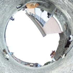 熊本県上天草のネコの島「湯島」にて。  Yushima is a getting famous cat Island in Amakusa Kumamoto Japan.  Almost 200 cats are living with people.  Photo by Cat photographer Kenichi Morinaga.  撮影 猫写真家・森永健一