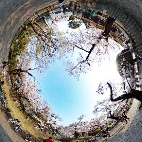 小金井公園 江戸東京たてもの園前2