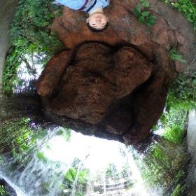 夢の島熱帯植物-滝