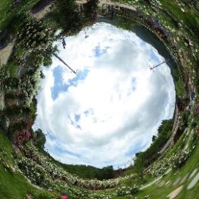 2019/06/09 ろっかはん 無料バラ園 #theta360