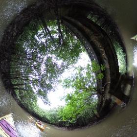 2018/11/02 西表島・ガイドにおまかせツアー【マングローブカヌー&滝遊び】 181102(3)