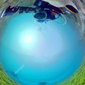2021/02/27 静浦、エダサンゴの群生 #padi #diving #フリッパーダイブセンター #静浦 #theta #theta_padi #theta360 #群馬 #伊勢崎 #ダイビングショップ #ダイビングスクール #ライセンス取得