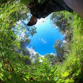 1. Собираем землянику в лесу. Максатихинский район. 15.07.2018г. #theta360