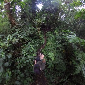 Trail through the #cloud forest near #Monteverdie #costarica #theta360