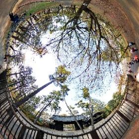小金井公園 江戸東京たてもの園前3
