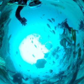 2020/11/22 伊戸、シャークダイビング #padi #diving #フリッパーダイブセンター #伊戸 #theta #theta_padi #theta360 #群馬 #伊勢崎 #ダイビングショップ #ダイビングスクール #ライセンス取得 #shark