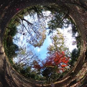 2020/11/26、大泉中央公園 野鳥の森側より #theta360