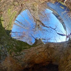 A treehole