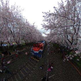 진해 경화역 벚꽃축제 #theta360