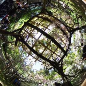 萬葉植物園 (春日大社)