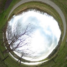春の散歩道:夕暮れ時、ベンチ付近の古木 #sakura3d