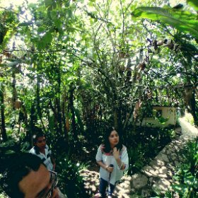 Jungle Cuetzalán Puebla in Mexico