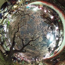 播磨坂の桜です✨