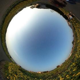 ソレイユの丘 ひまわり!20198月終わり夕方。。 きれいでした!ちょっとプロバンスぽい? ドイツ式カイロプラクティック逗子整体院 www.zushi-seitai.com  #theta360