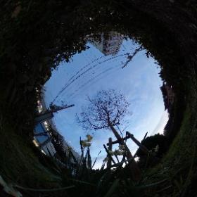 水仙 #尼崎写真部D斑THETA係 #写真ライフ #尼崎 #阪神電車 #出屋敷公園 #theta_v #そうだもっと尼崎を宣伝しよう‼️ #snowcrystal3d #theta360