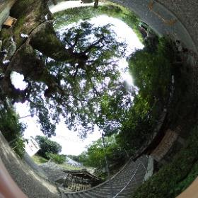 玉祖神社の大くすのき。