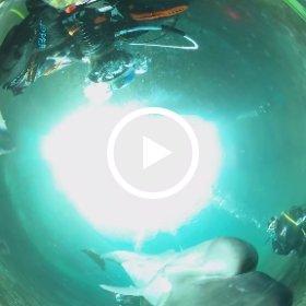 2021/01/09 ドルフィンダイビング #padi #diving #フリッパーダイブセンター #伊東 #theta #theta_padi #theta360 #群馬 #伊勢崎 #ダイビングショップ #ダイビングスクール #ライセンス取得