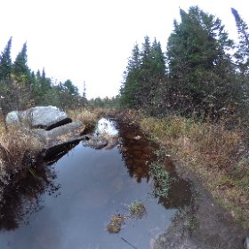 Woodland stream #algonquin #outdoors #nature #wilderness #travel #landscape #forest #tree #canada #canada_gram #stream #water #theta360