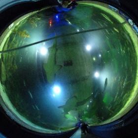 Deep Sea World, Edinburgh, Scotland  #theta360 #theta360uk