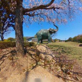 大分市美術館 平和の木🌸 #sakura3d