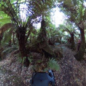 Badger Weir Picnic Area #Healesville #yarravalley #australia  #theta360
