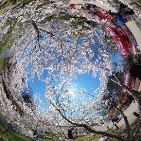 上田城跡公園3 #theta360