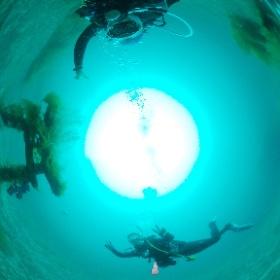 2020/05/31大瀬崎 OWD海洋実習 #padi #diving #フリッパーダイブセンター #大瀬崎 #theta #theta_padi #theta360 #群馬 #伊勢崎 #ダイビングショップ #ダイビングスクール #ライセンス取得