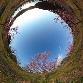佐布里緑と花のふれあい公園 梅まつり2 #知多市