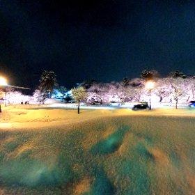 今日も弘前公園外濠は満開! #冬に咲くさくらライトアップ #弘前冬桜 #theta360