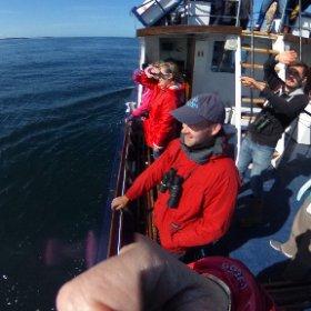 Whale watching with Sealife Surveys Sept 2016 #theta360 #theta360uk