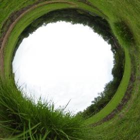 草地の生態園、ススキの草叢