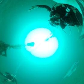 2020/06/14大瀬崎 OWD海洋実習 #padi #diving #フリッパーダイブセンター #大瀬崎 #theta #theta_padi #theta360 #群馬 #伊勢崎 #ダイビングショップ #ダイビングスクール #ライセンス取得
