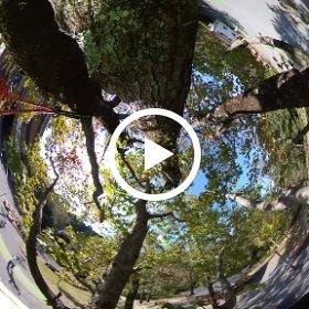 ロープで木登り中!