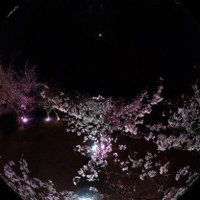 松山城桜ライトアップ(2018.3.26) #theta360