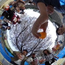 みぃ丸亭の花見🌸 天気も良く、料理も美味しく最高の花見でした(*´ω`*)♩ #sakura3d #theta360