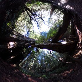 Prairie Creek Redwoods State Park, California.  January 1, 2016.  Between Eureka and Crescent City, CA, on the Redwood Coast. #theta360