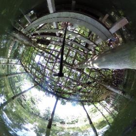 久伊豆神社(池)/越谷 錦鯉や亀もいっぱいいます。 #theta360