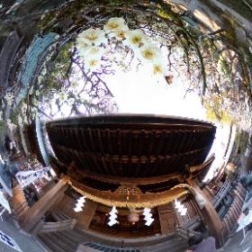 この写真は静岡県島田市の大井神社の本堂と白梅の様子であります。その時はまだ満開ではないのですが、白梅の花が開花していました。  この360度写真は、THETAのプラグインのタイムシフト機能を活用して、大井神社の本殿の180度写真と白梅の花の180度写真を一枚の360度写真にまとめました。 #theta360