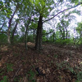 CRHS Forest pixel 2 #theta360