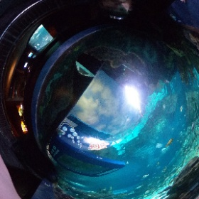 Shot in the Ripley's Aquarium of the Smokies in Gatlinburg, Tennessee with the Ricoh Theta V.