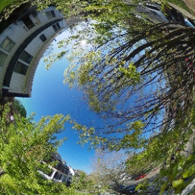 Spring time - April 2016 #sakura3d #theta360
