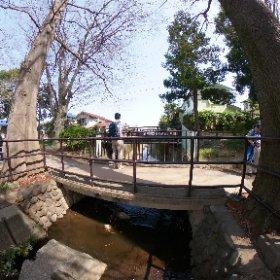ここから善福寺川
