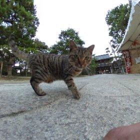 【蔵出し】 天の橋立でネコとシータ! WebGL対応スマホなら画質向上したはず。