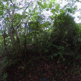 Sekundärvegetation nahe Mahajanga, Region Boeny, West-Madagaskar, März 2020