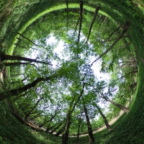 Visited Merwin Nature Preserve (near Lexington, IL) on May 18, 2019 (Central Illinois Entomology group field trip). #theta360 (view in Mackinaw River floodplain)