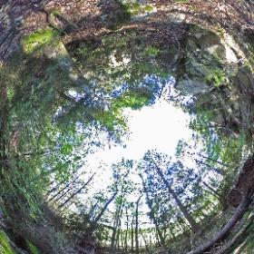"EK 30 ""Eken i branten"" i Sollidens gammelskog växer med fri utsikt över storgranen och dess fallna gran-ne - www.naturarvet.se - #naturarvet #gammelskog #ek #ädellövskog"